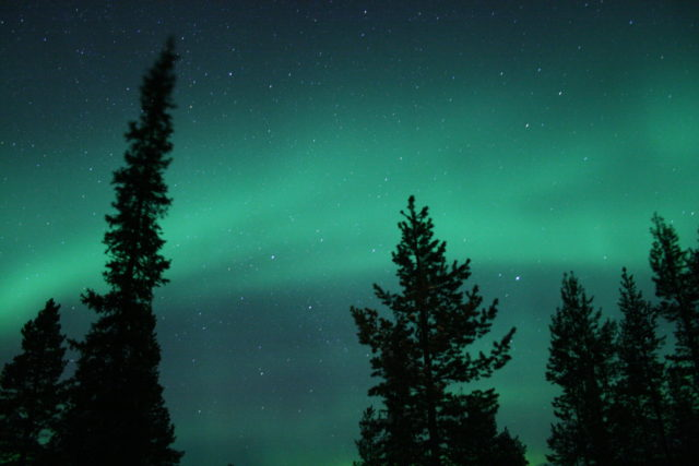 Green aurora and Christmas trees on a snowmobile route from the Icehotel, Sweden.